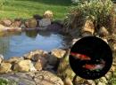 Fischzucht & Teiche