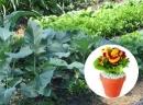 Garten & Zimmerpflanzen