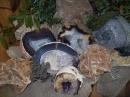 Geoden und Sandrosen