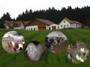 Nutztiere & Landwirtschaft