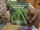 Buch-Der Wunderbaum Moringa