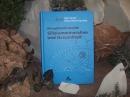 Klinoptilolith-Zeolith Siliziummineralien und Gesundheit